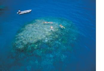 reef.png