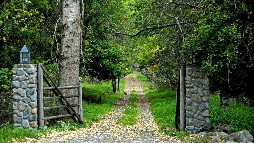 Green Road Trees Forests Nature Forest Wallpaper For Android